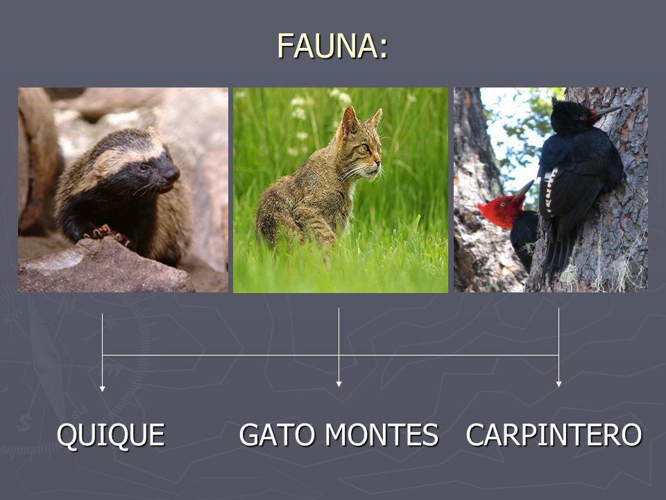 FAUNA: QUIQUE GATO MONTES CARPINTERO