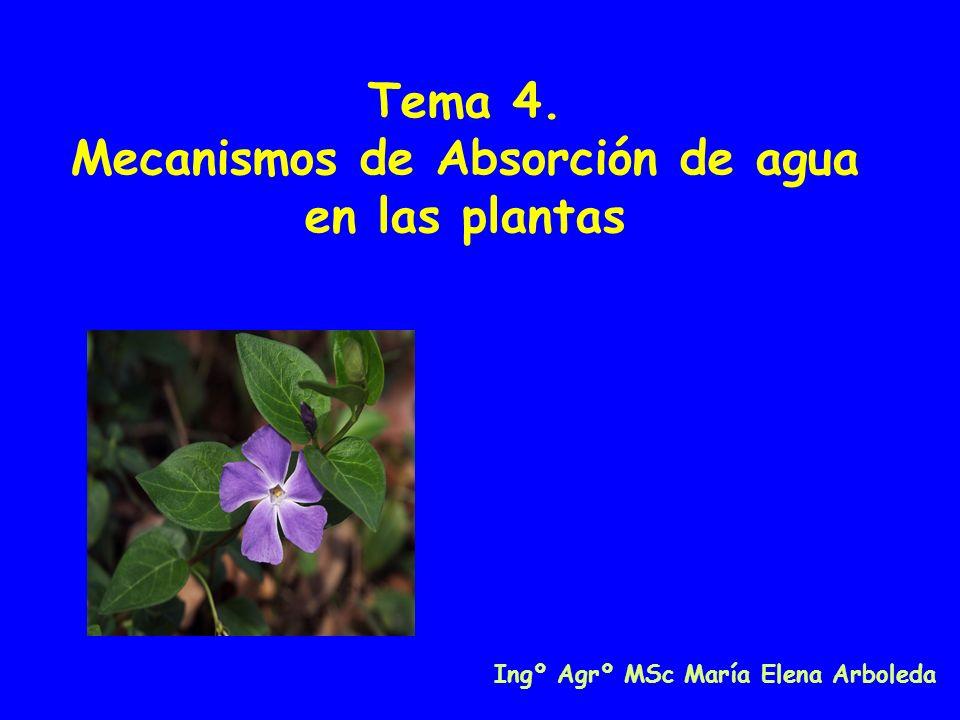 Tema 4. Mecanismos de Absorción de agua en las plantas