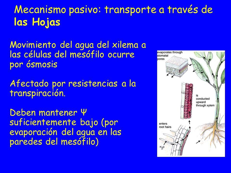 Mecanismo pasivo: transporte a través de las Hojas