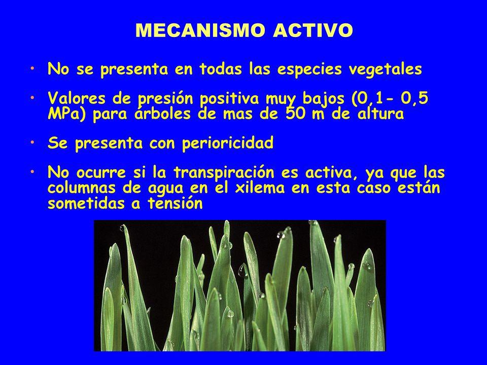 MECANISMO ACTIVO No se presenta en todas las especies vegetales