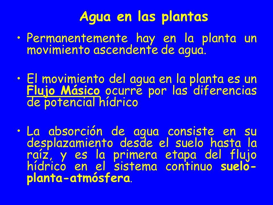 Agua en las plantas Permanentemente hay en la planta un movimiento ascendente de agua.