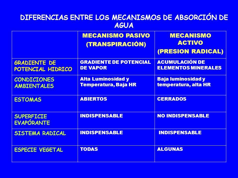 DIFERENCIAS ENTRE LOS MECANISMOS DE ABSORCIÓN DE AGUA