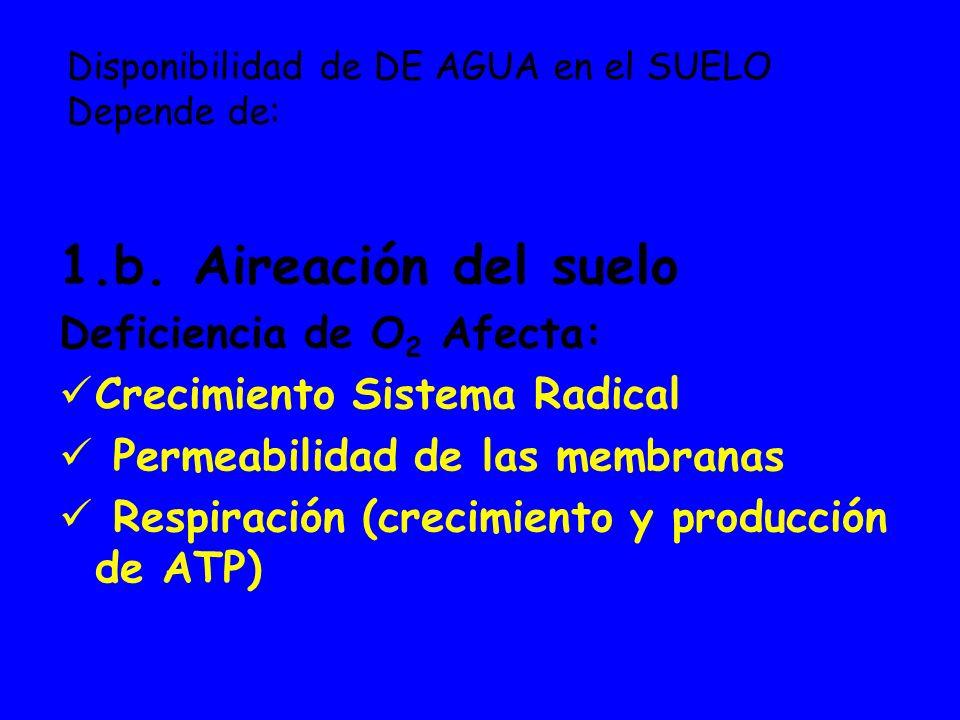 Disponibilidad de DE AGUA en el SUELO Depende de: