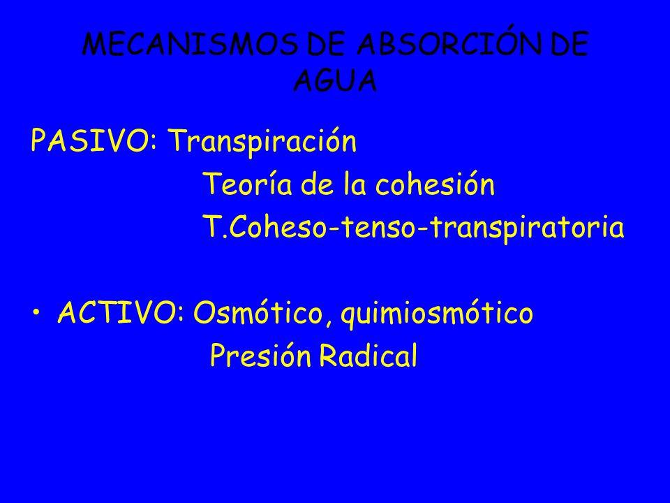 MECANISMOS DE ABSORCIÓN DE AGUA