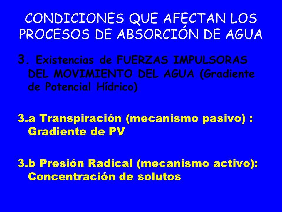 CONDICIONES QUE AFECTAN LOS PROCESOS DE ABSORCIÓN DE AGUA
