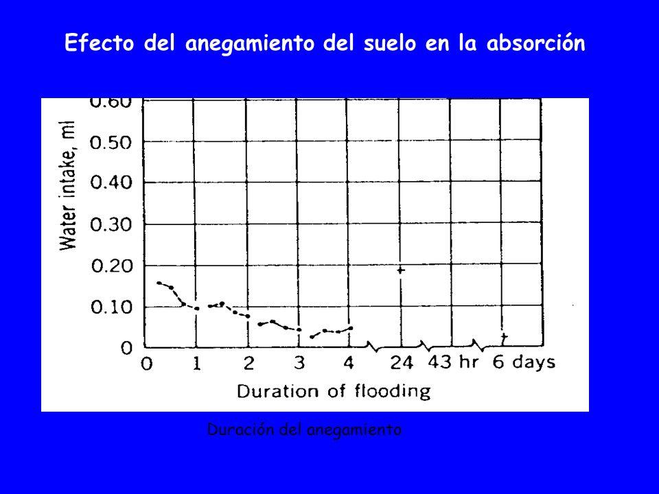 Efecto del anegamiento del suelo en la absorción