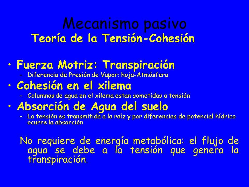Mecanismo pasivo Teoría de la Tensión-Cohesión