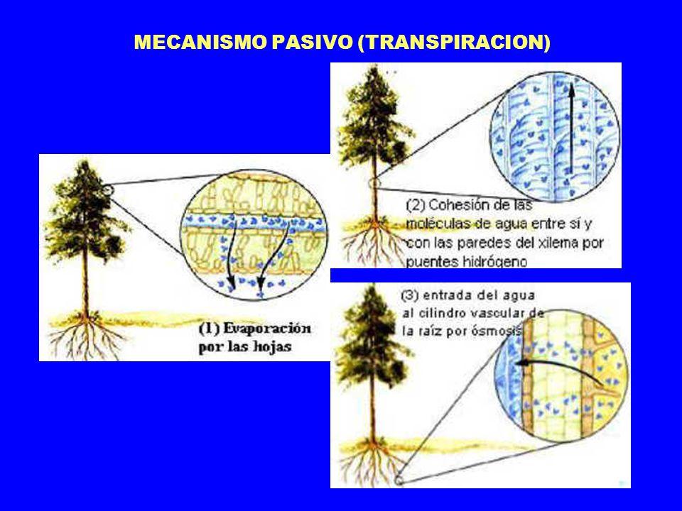 MECANISMO PASIVO (TRANSPIRACION)
