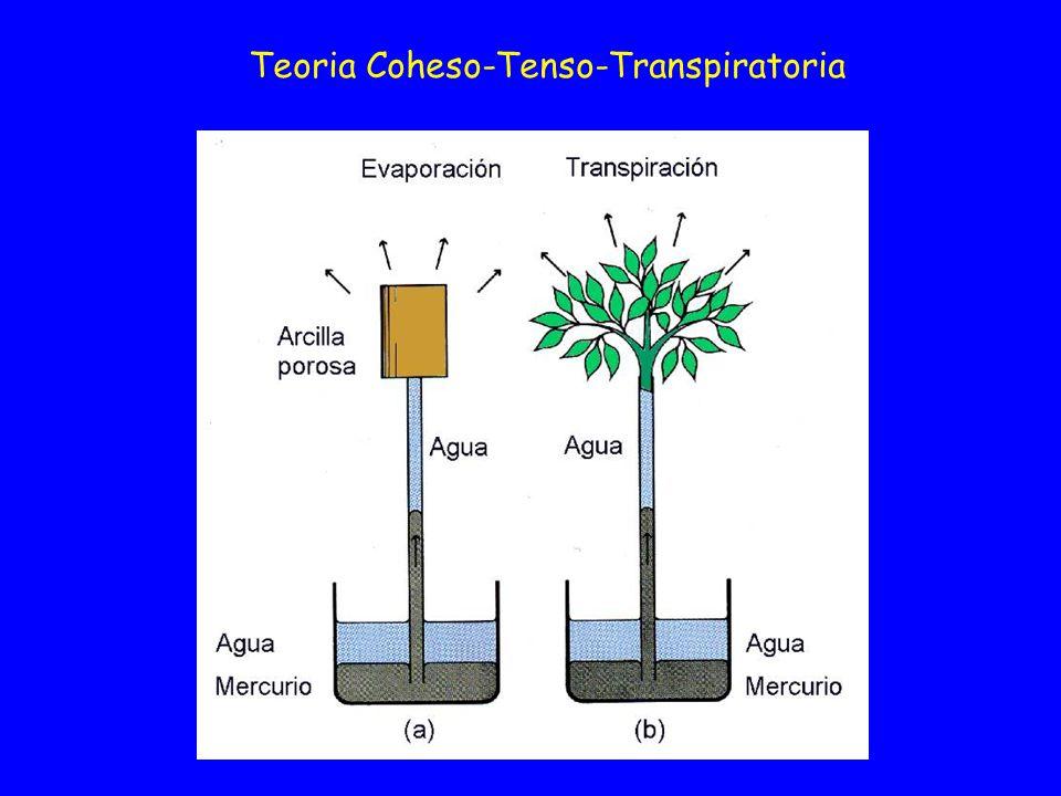 Teoria Coheso-Tenso-Transpiratoria