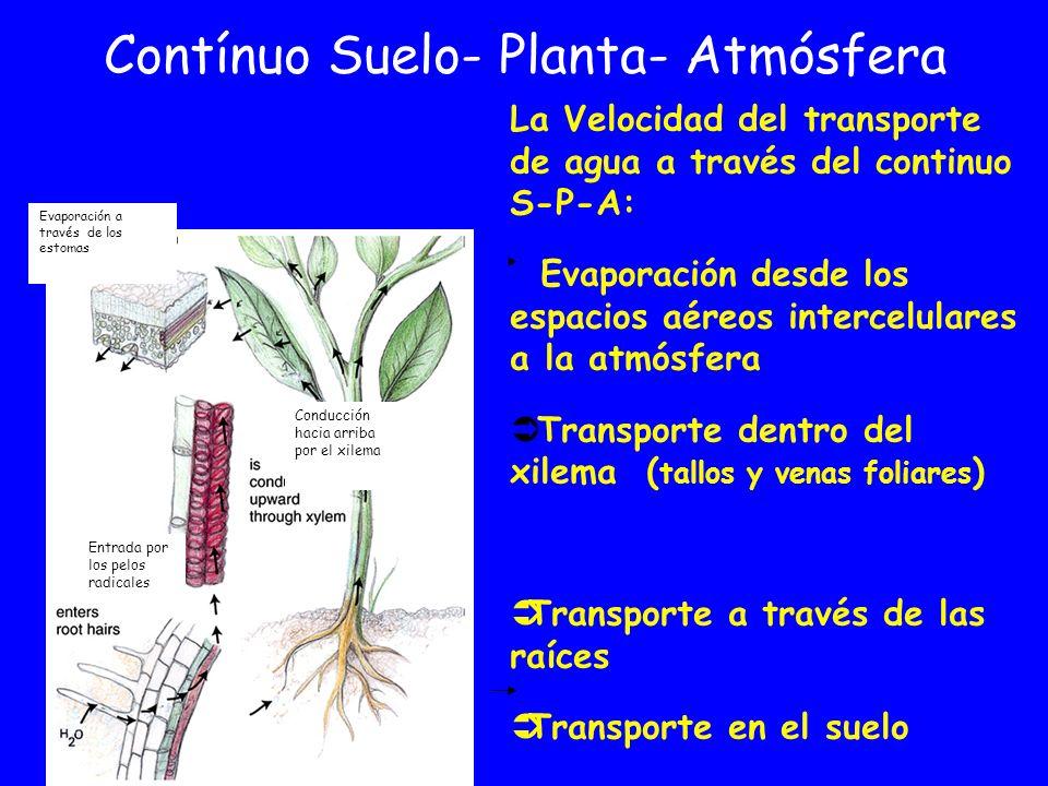 Contínuo Suelo- Planta- Atmósfera
