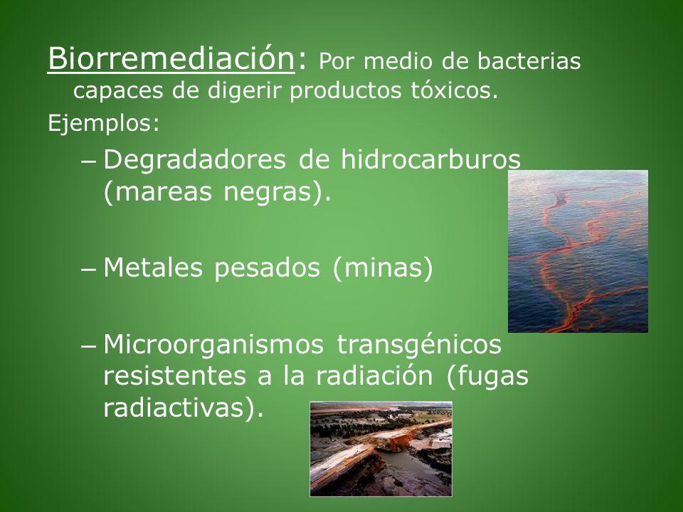 Biorremediación: Por medio de bacterias capaces de digerir productos tóxicos.