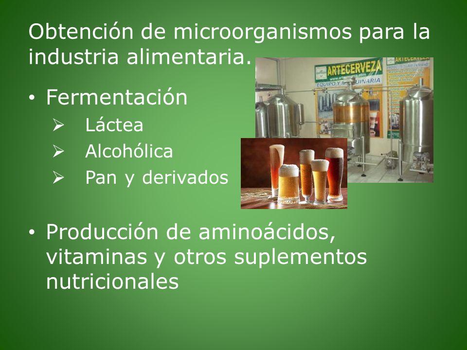 Obtención de microorganismos para la industria alimentaria.