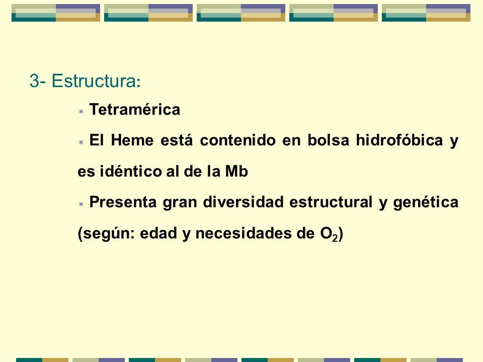 3- Estructura: Tetramérica