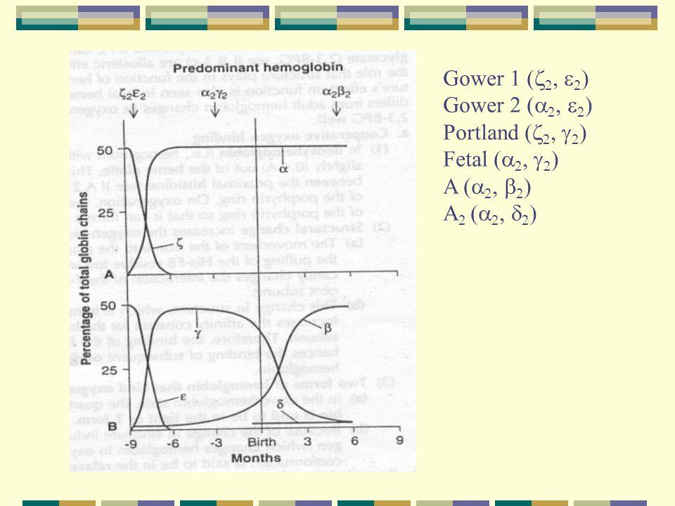 Gower 1 (z2, e2) Gower 2 (a2, e2) Portland (z2, g2) Fetal (a2, g2) A (a2, b2) A2 (a2, d2)