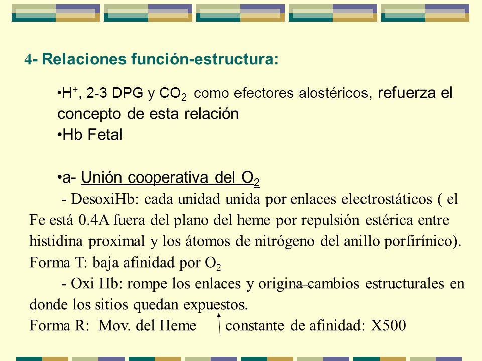 4- Relaciones función-estructura: