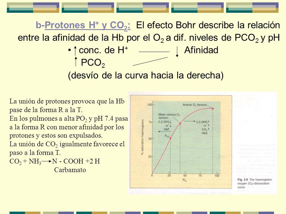 b-Protones H+ y CO2: El efecto Bohr describe la relación