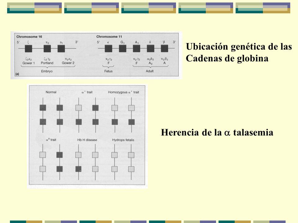 Ubicación genética de las