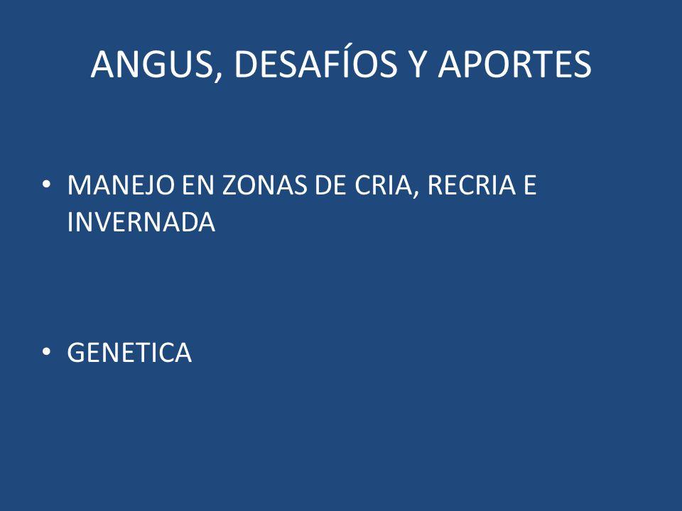 ANGUS, DESAFÍOS Y APORTES