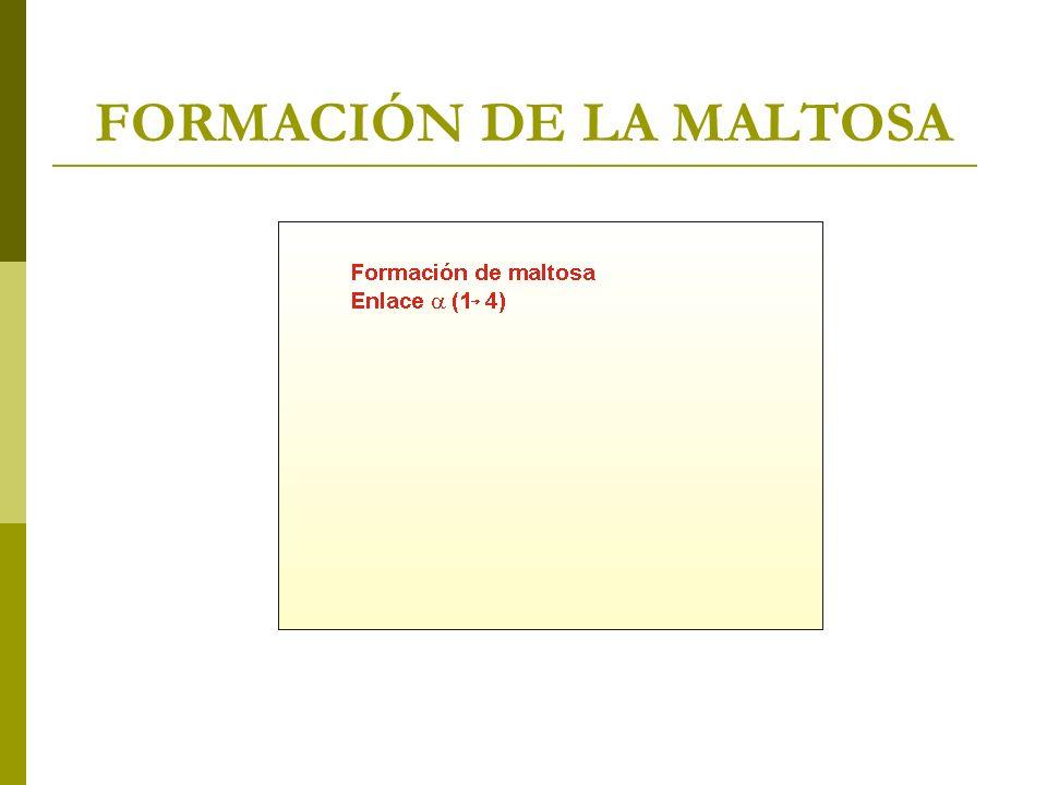 FORMACIÓN DE LA MALTOSA