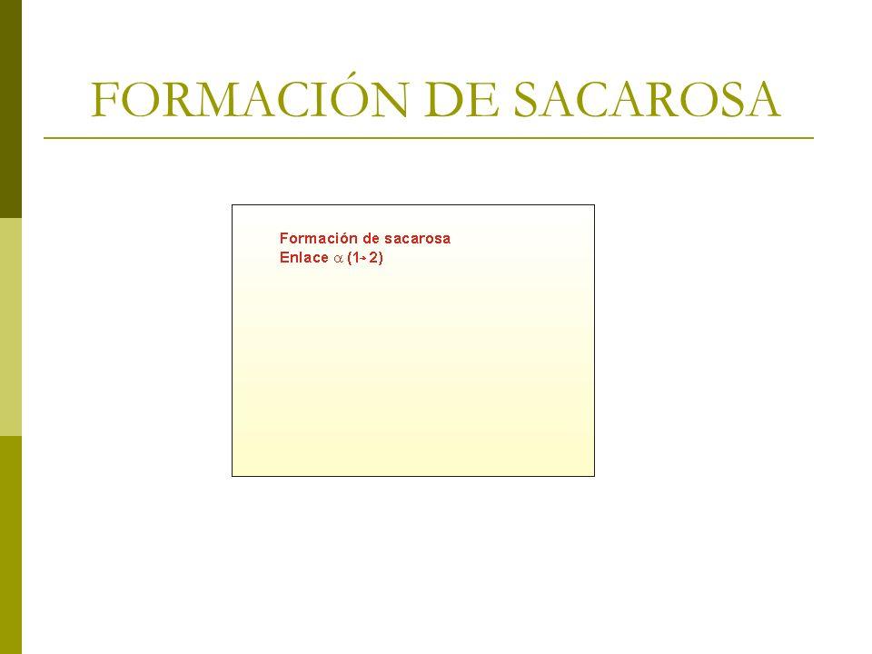 FORMACIÓN DE SACAROSA