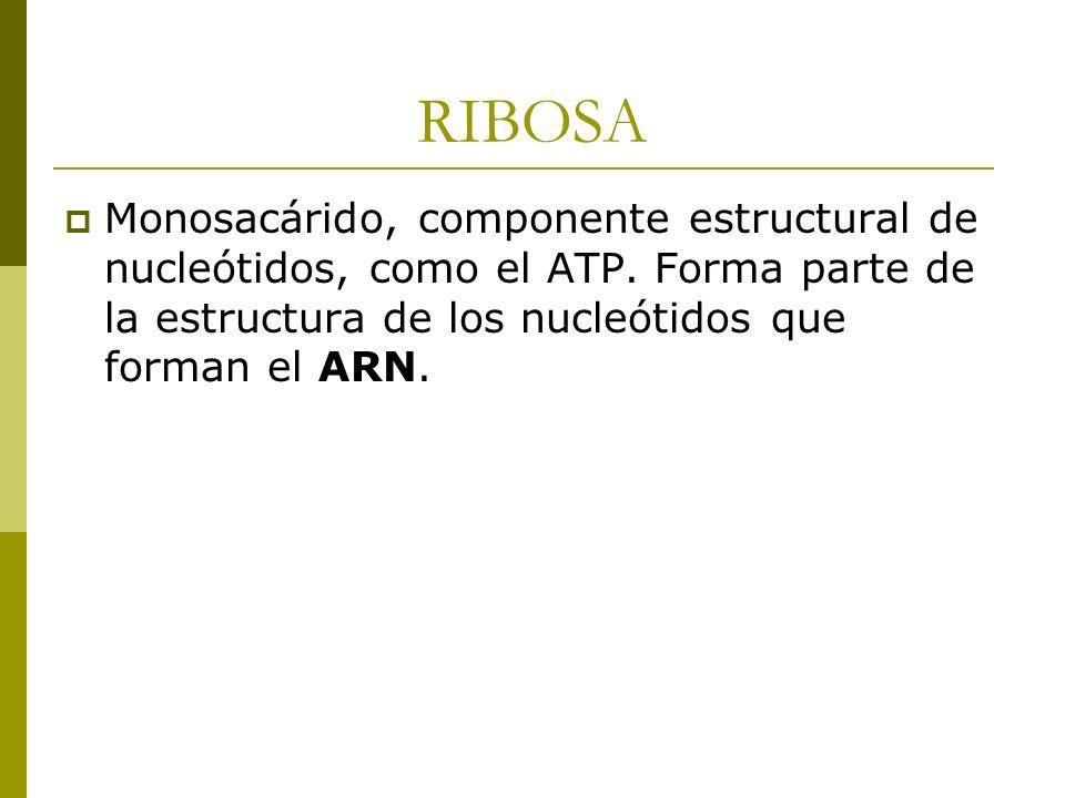 RIBOSA Monosacárido, componente estructural de nucleótidos, como el ATP.