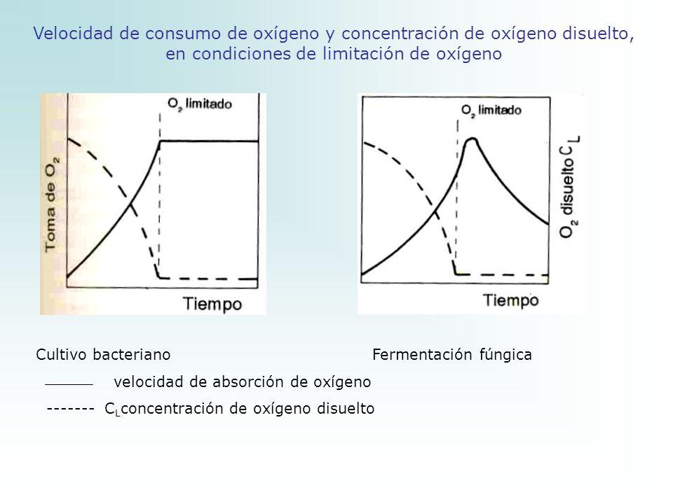 Velocidad de consumo de oxígeno y concentración de oxígeno disuelto, en condiciones de limitación de oxígeno