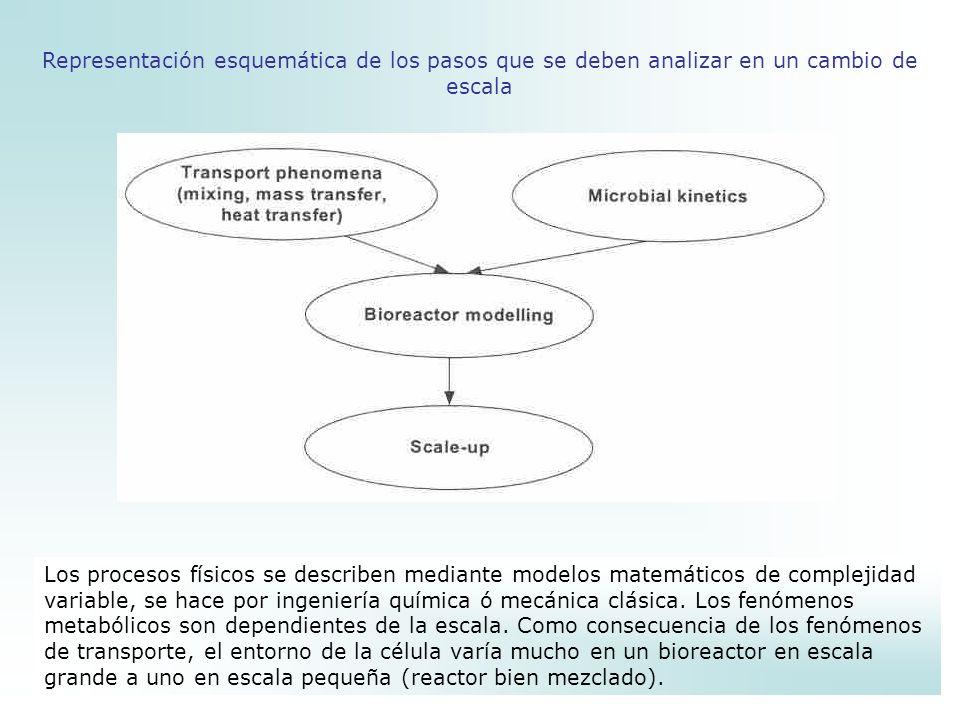 Representación esquemática de los pasos que se deben analizar en un cambio de escala
