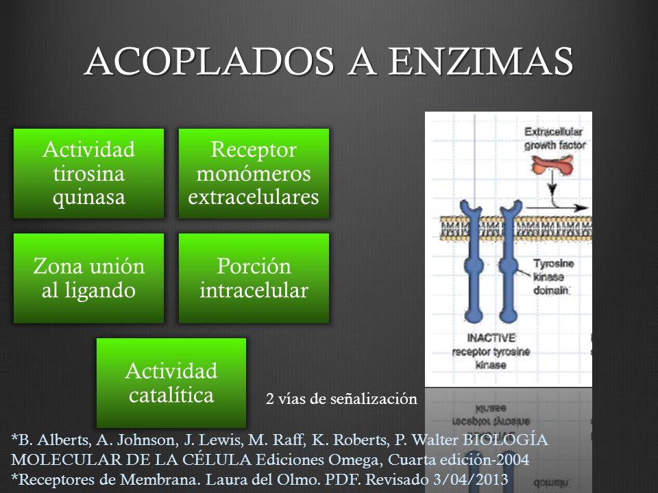 ACOPLADOS A ENZIMAS Actividad tirosina quinasa