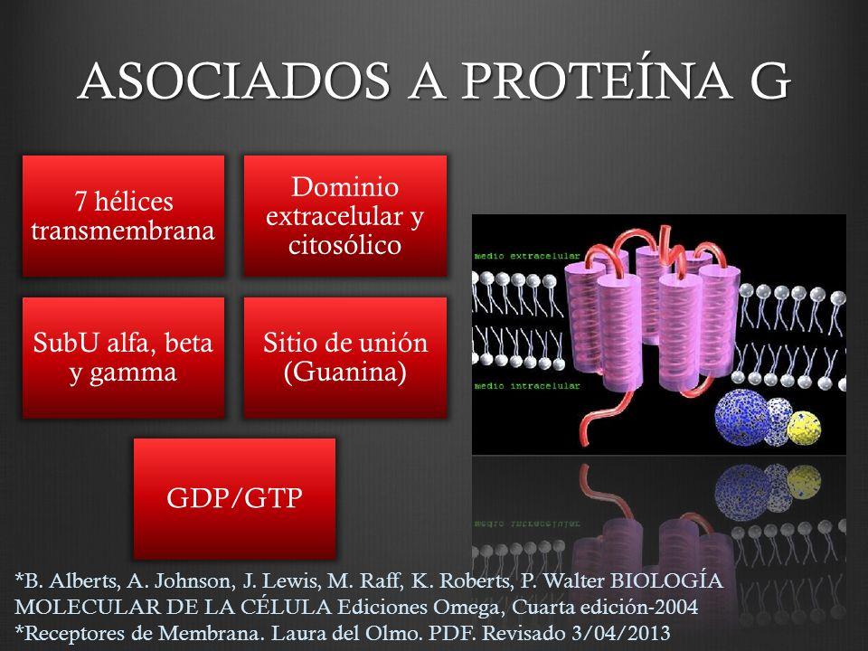 ASOCIADOS A PROTEÍNA G 7 hélices transmembrana