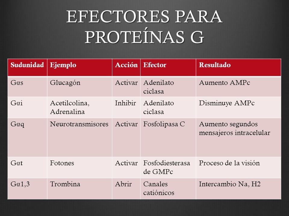 EFECTORES PARA PROTEÍNAS G