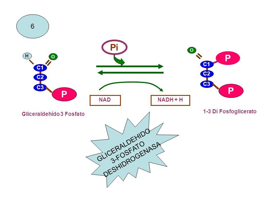 GLICERALDEHIDO 3-FOSFATO DESHIDROGENASA
