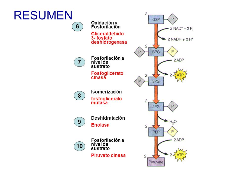 RESUMEN 6 7 8 9 10 Oxidación y Fosforilación