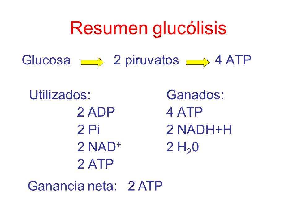 Resumen glucólisis Glucosa 2 piruvatos 4 ATP Utilizados: Ganados: