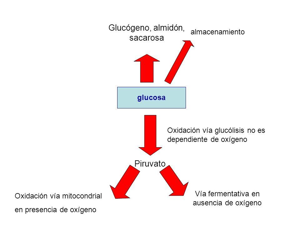 Glucógeno, almidón, sacarosa