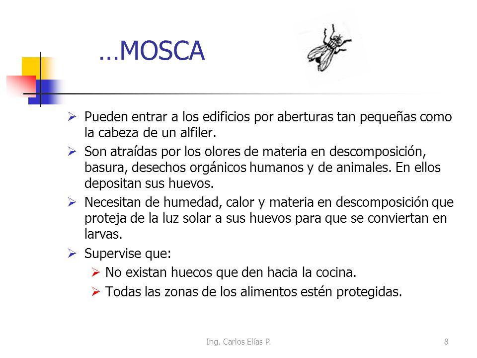 …MOSCA Pueden entrar a los edificios por aberturas tan pequeñas como la cabeza de un alfiler.