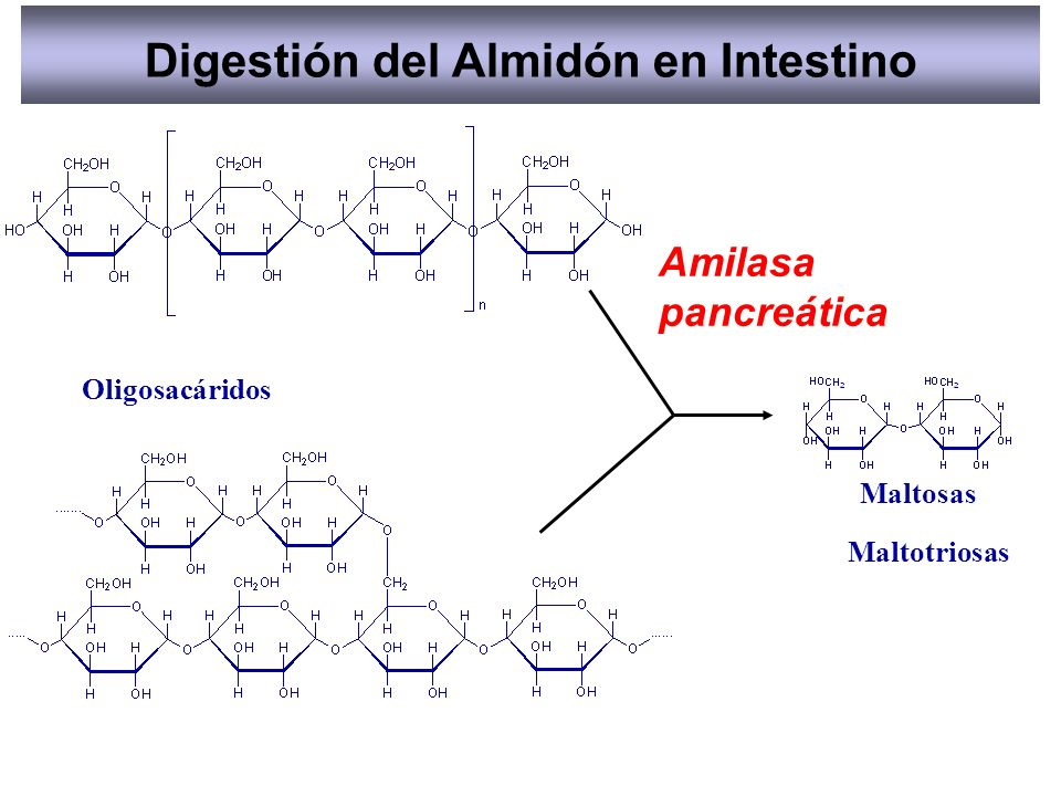 Digestión del Almidón en Intestino