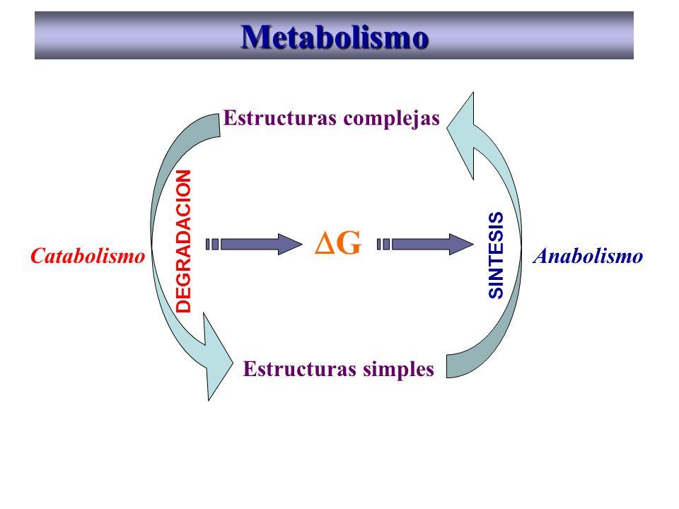 Metabolismo DG Estructuras complejas Estructuras simples Catabolismo