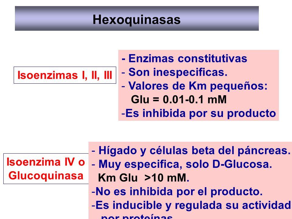 Hexoquinasas - Enzimas constitutivas Son inespecificas.