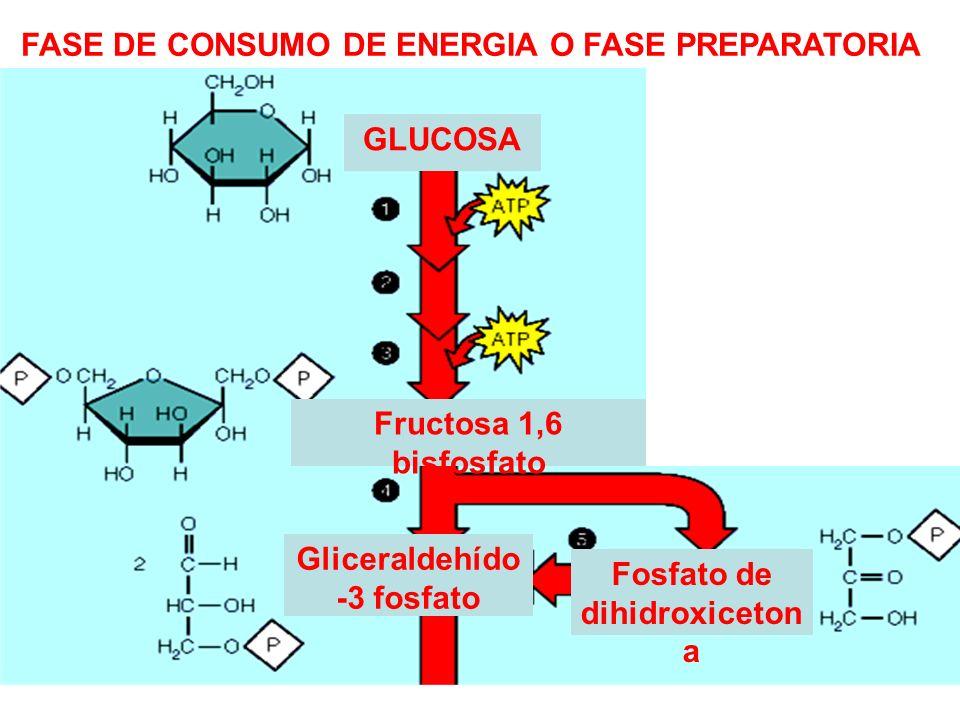 FASE DE CONSUMO DE ENERGIA O FASE PREPARATORIA