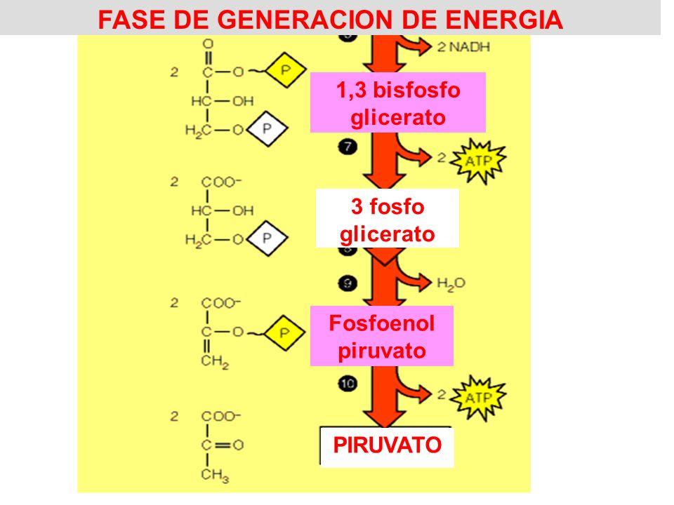 FASE DE GENERACION DE ENERGIA