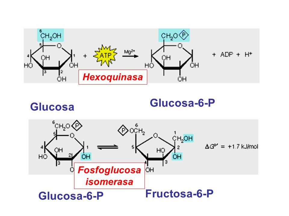 Fosfoglucosa isomerasa