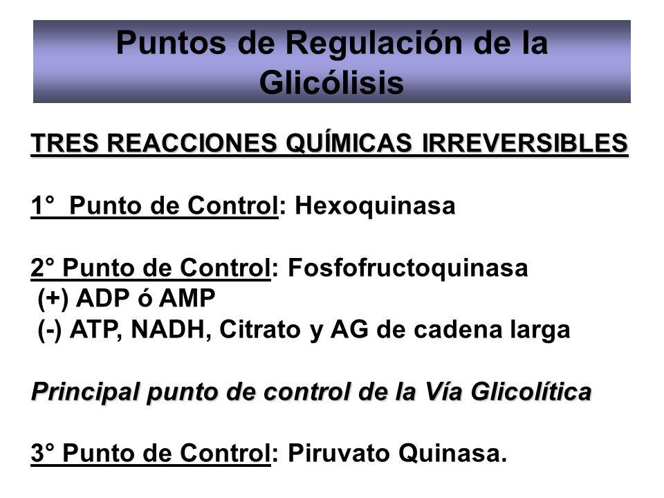 Puntos de Regulación de la Glicólisis