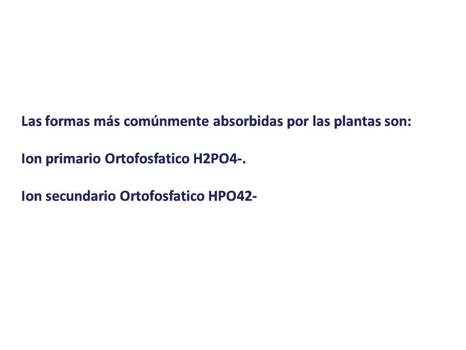 Las formas más comúnmente absorbidas por las plantas son: