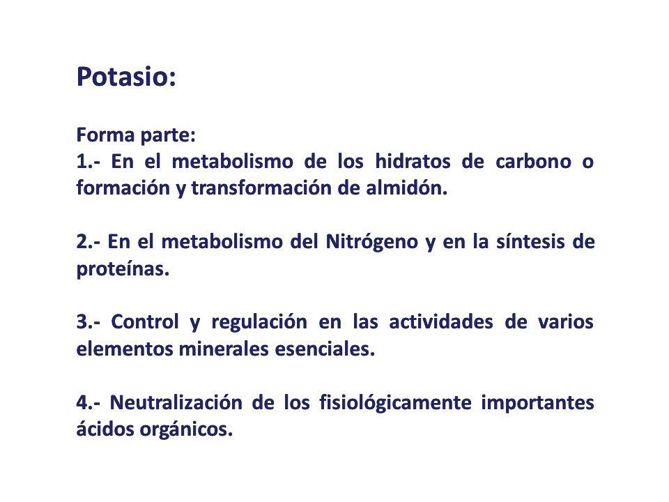 Potasio:Forma parte: 1.- En el metabolismo de los hidratos de carbono o formación y transformación de almidón.