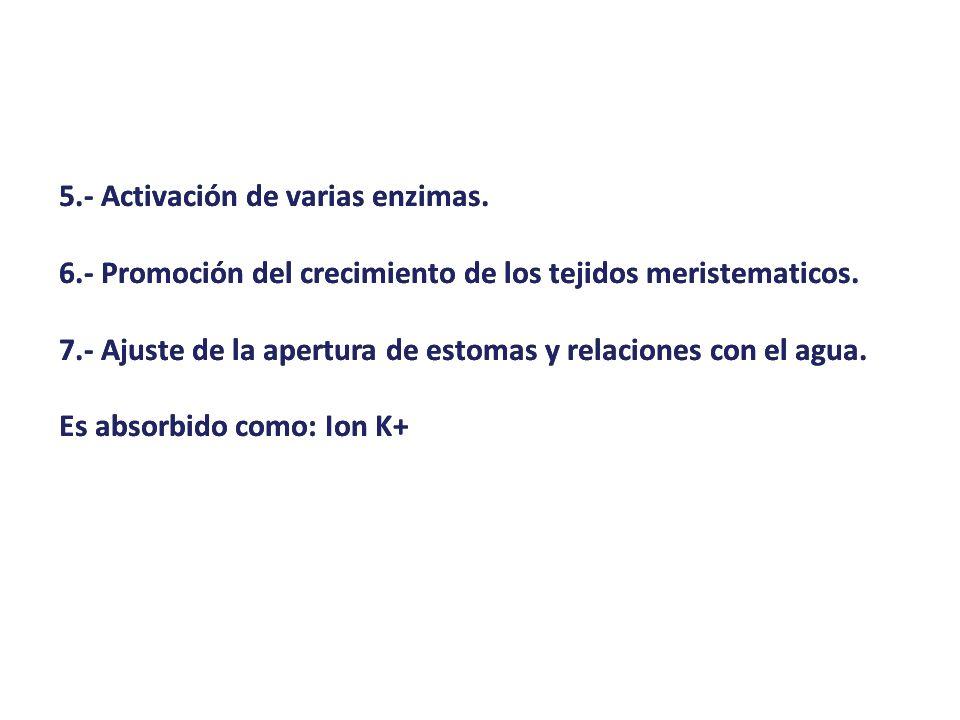 5.- Activación de varias enzimas.