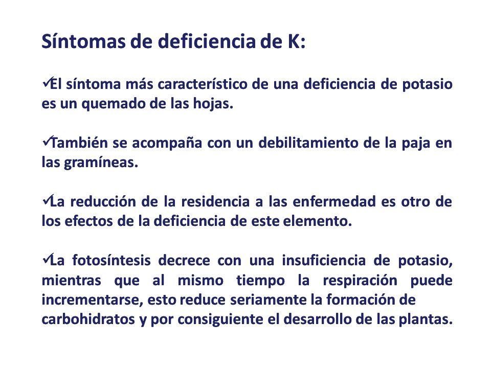 Síntomas de deficiencia de K: