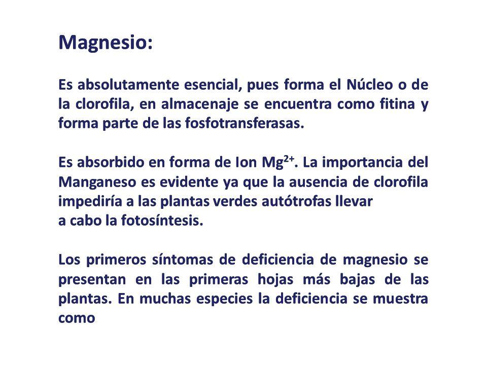 Magnesio: