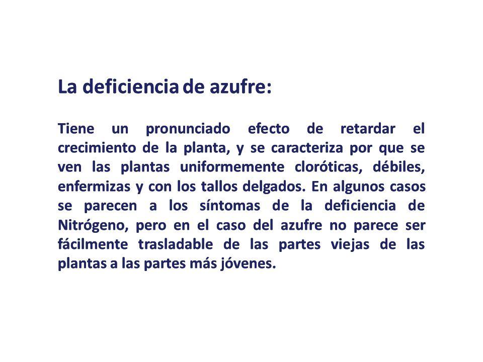 La deficiencia de azufre:
