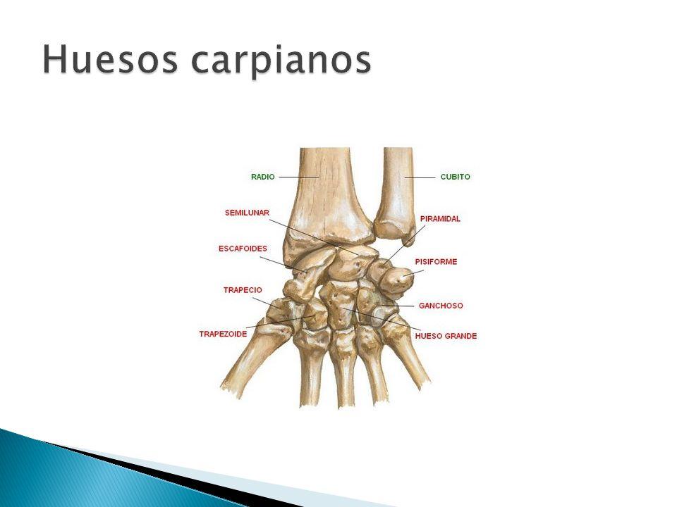 Increíble Roto Huesos De La Muñeca Anatomía Bosquejo - Anatomía de ...
