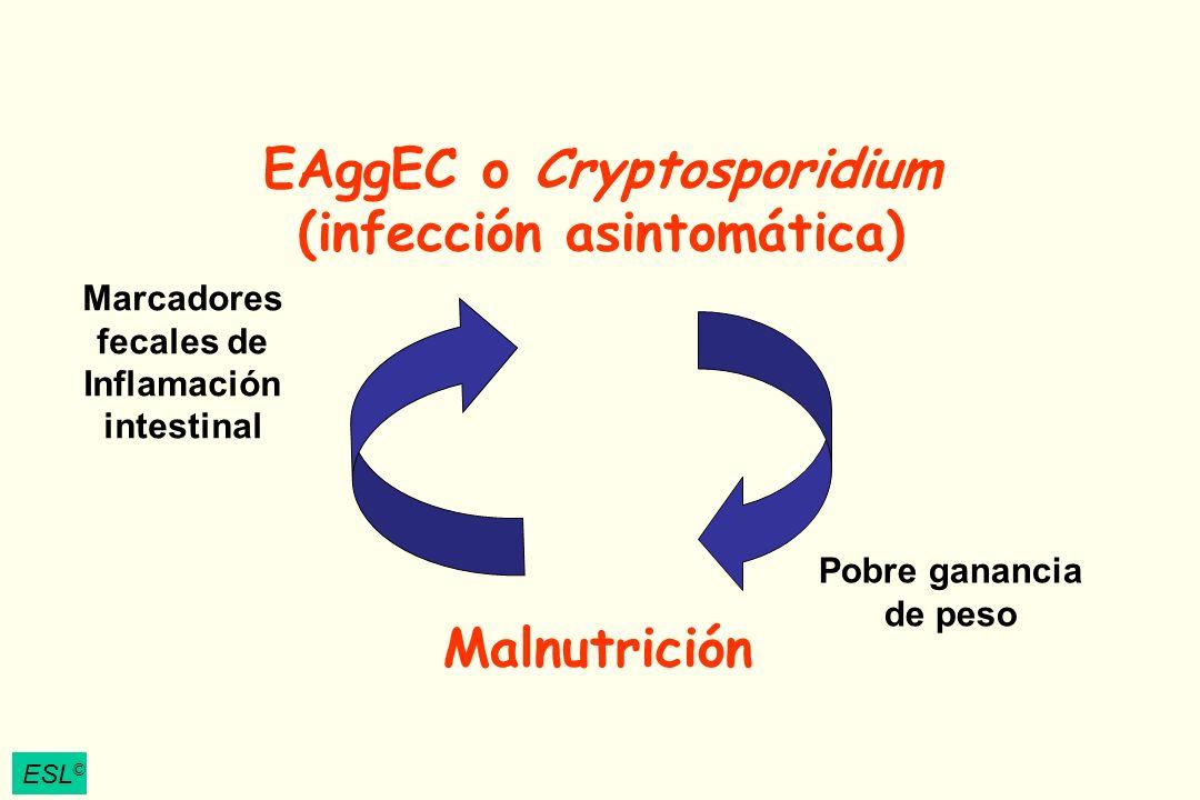 EAggEC o Cryptosporidium (infección asintomática) Malnutrición